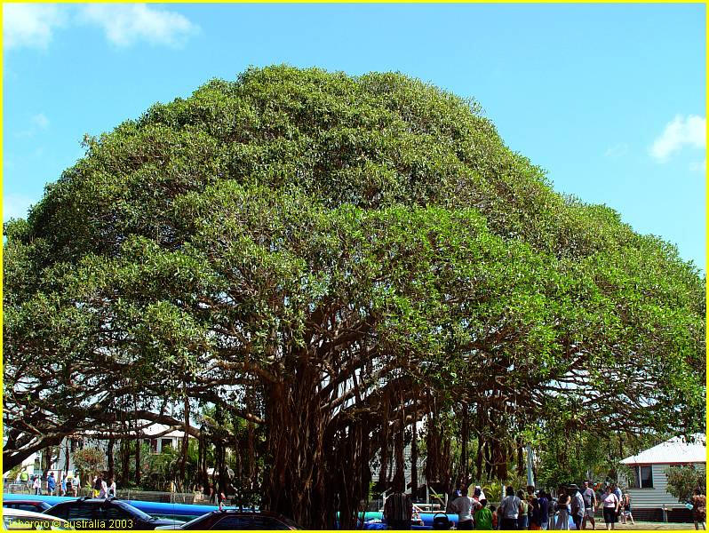 THE FIG TREE PARABLE